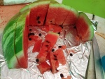 2015-07-06_TNCopperhill,TumblingCreek_Watermelon